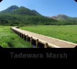 Tadewara Marsh