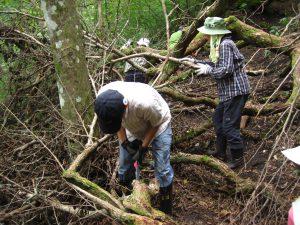 倒木処理の様子